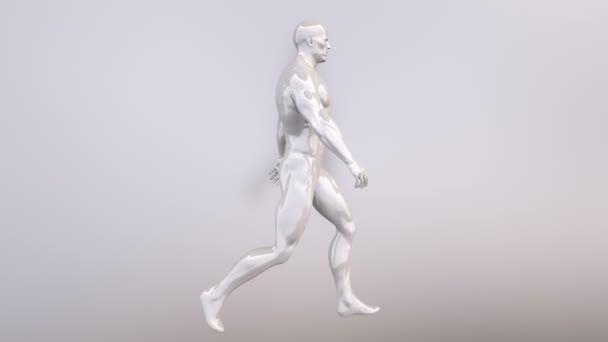 Animation des Gehens Mann. Endlos wiederholbar Animation. 4k ...