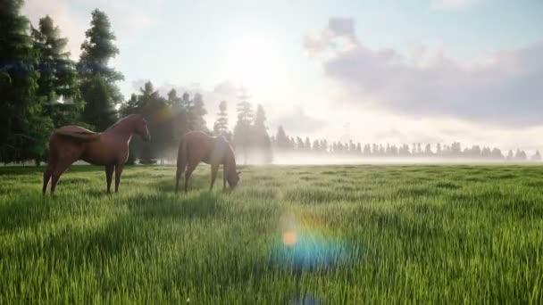Krásné divoké koně pasou na louce za úsvitu. Koncept koní. Animace smyčky.