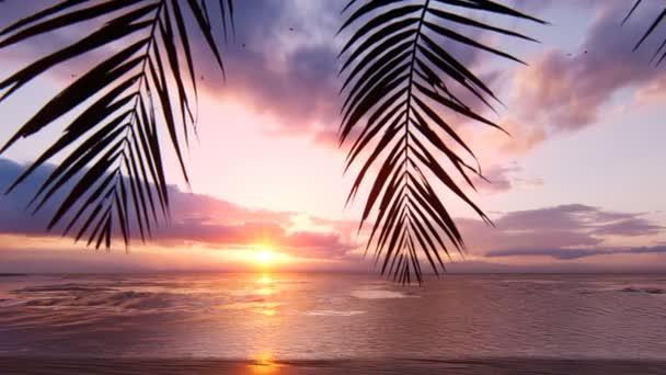 Vörös naplemente a végtelen óceán felett. Vörös ég, sárga nap, pálmafák, gyönyörű tenger és tengerpart. Nyári csodálatos naplemente a tengerparton. Looping animáció.