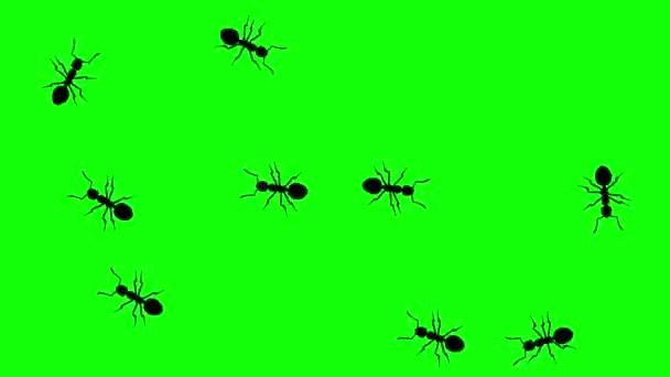 A hangyák, Cg animációs sziluettek zöld képernyő, varrat nélküli hurok a Raj