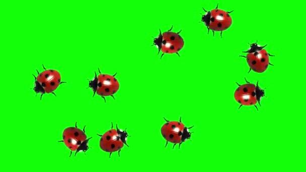 Roj berušky, Cg animovaný na zelené obrazovce, bezešvé smyčka