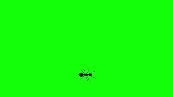 A zöld képernyő Ant, Cg animációs sziluett, varrat nélküli hurok