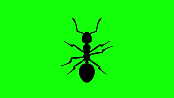 Fixed Ant on green screen, CG animated silhouette, looping