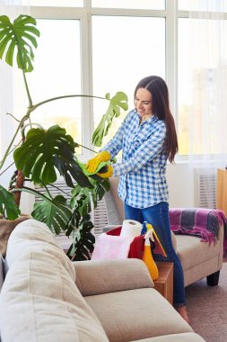 Slim lady cleaning leaves of houseplant