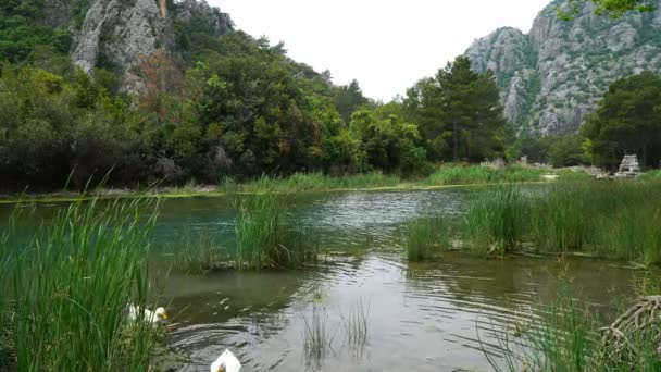 Beautful Creek with Ducks at The Olympos Antalya in 4K Resolution.