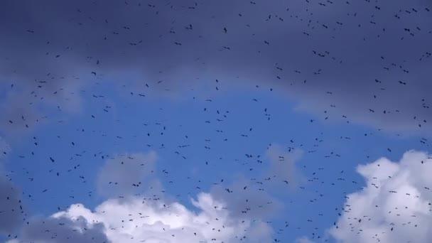 Hejno čápů lítá po modré obloze a na pozadí nadýchané mraky.