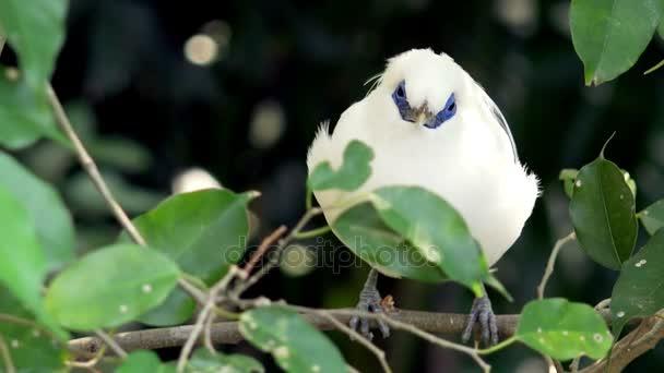 Tropický pták sedící na větvi