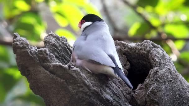 4 k Datailní pohled pták