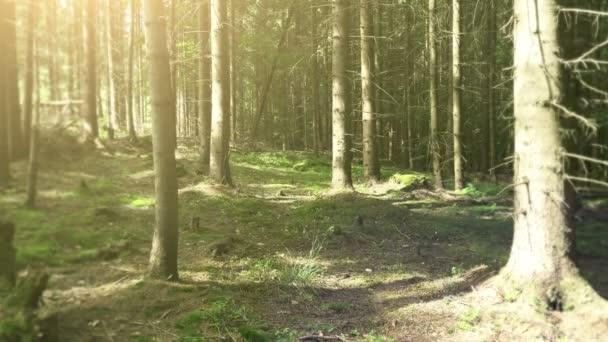 Kmeny stromů v lese s slunečního záření