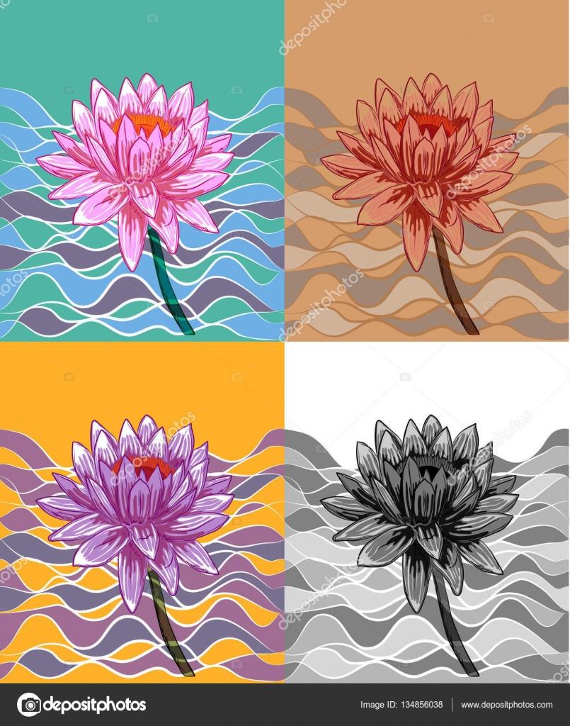 Dibujo Flor De Loto A Color Ilustración De Flor De Loto En
