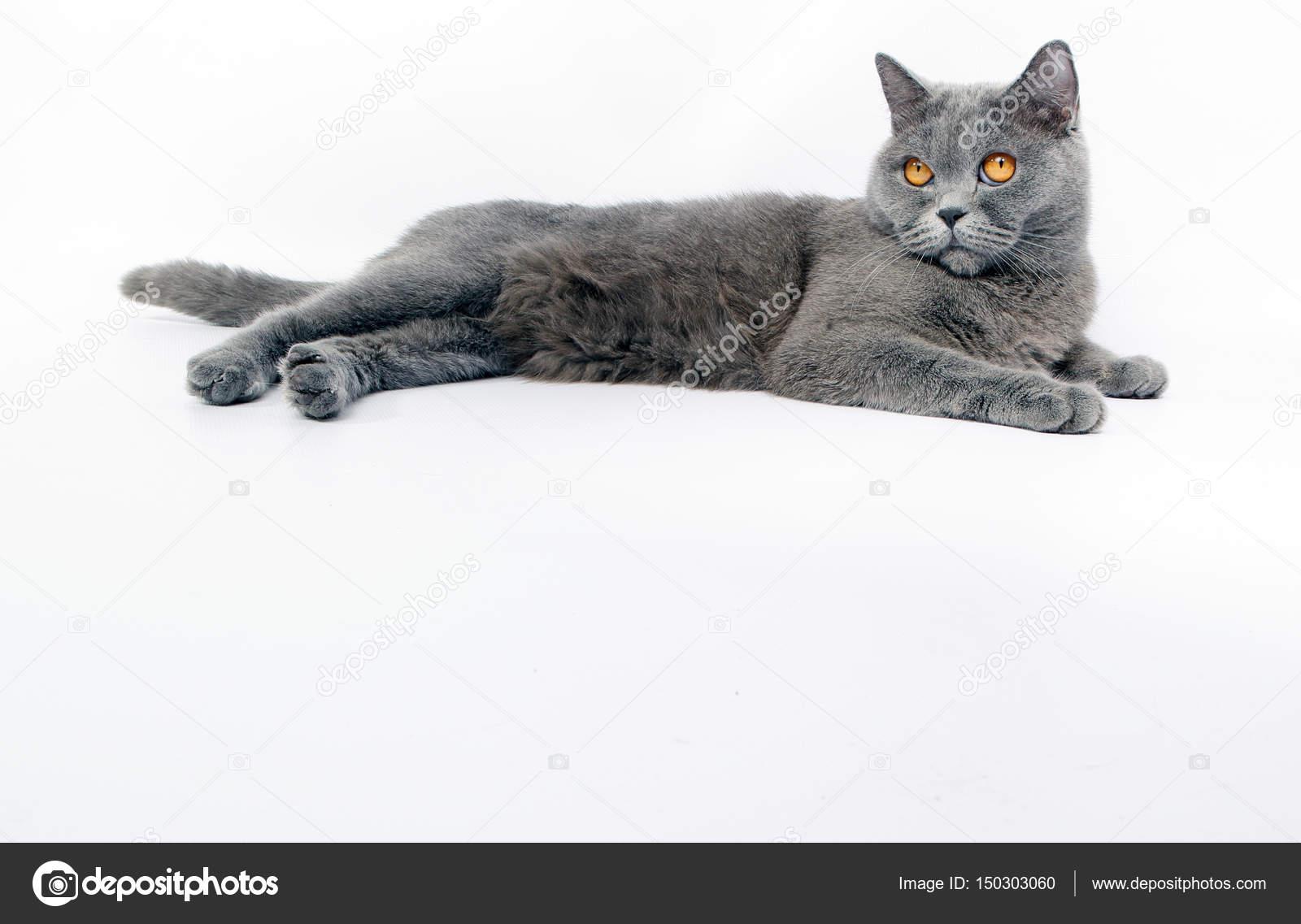 Krásné otevřené kočička fotky
