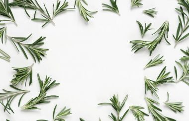 green rosemary leaves