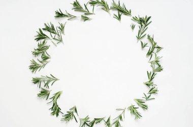 green rosemary leaves