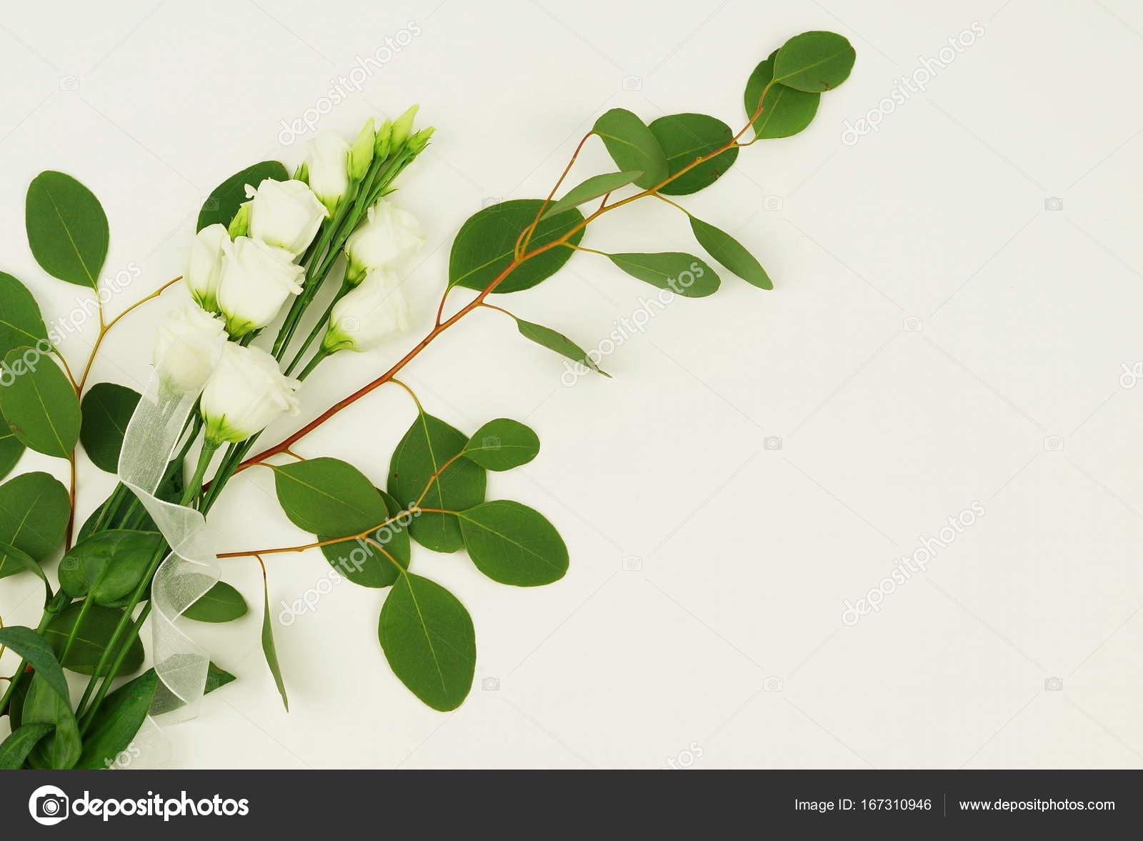 branche d'eucalyptus vert avec fleurs — photographie si-27star
