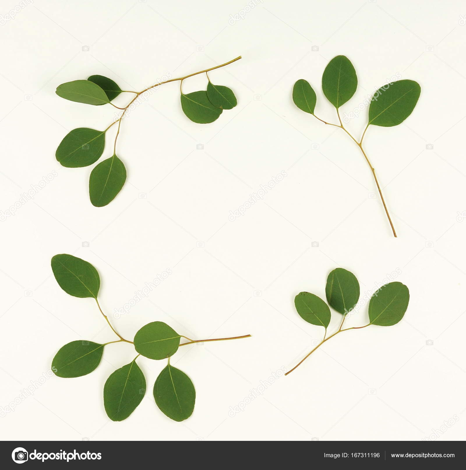 branches d'eucalyptus vert — photographie si-27star © #167311196