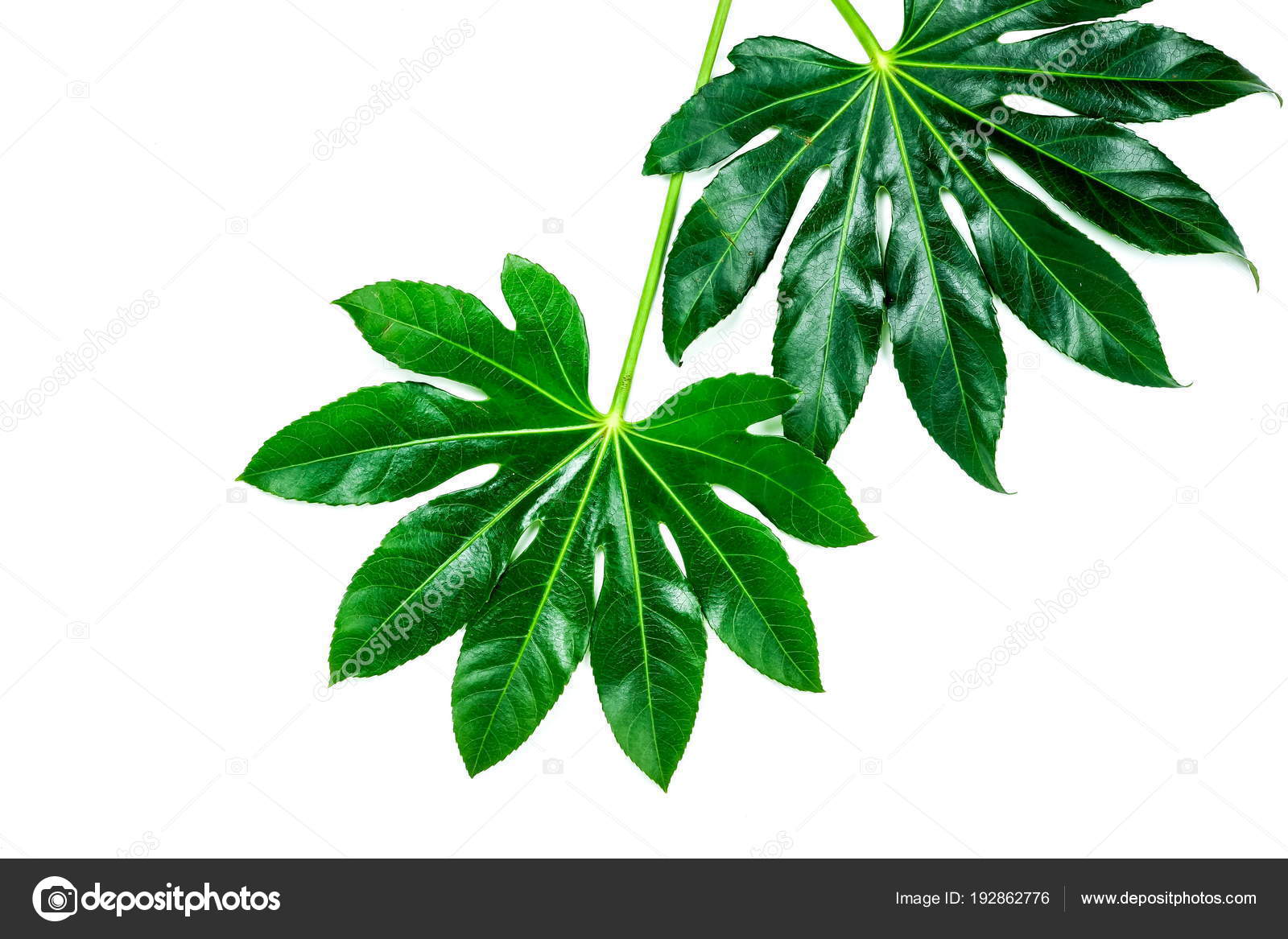 Abstract Frame Made Green Tropical Leaves White Background Flat Lay Stock Photo C Si 27star 192862776 Orchid tropical leaves and flowers background. abstract frame made green tropical leaves white background flat lay stock photo c si 27star 192862776