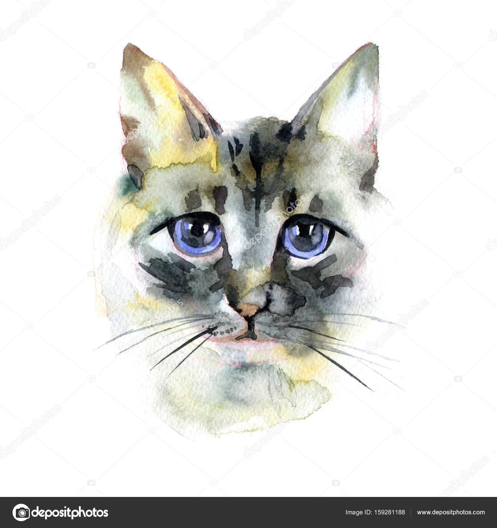 長髪のシャム猫バリ猫水彩の手描きイラスト ストック写真