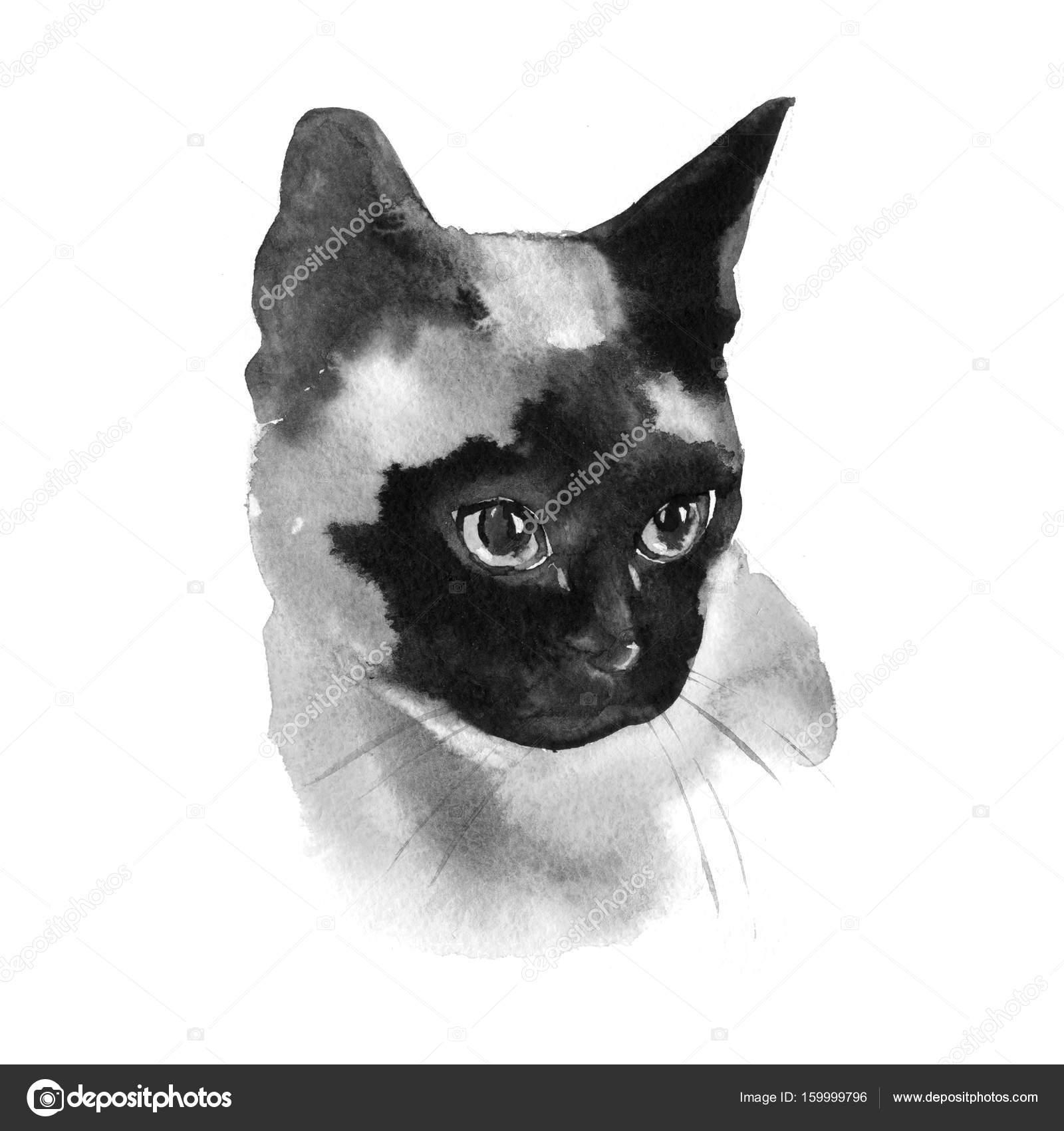水彩シャム猫手ペット肖像画イラスト白で隔離 ストック写真 7slonov