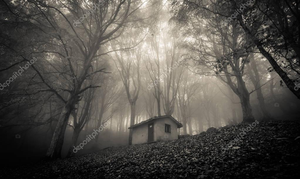 Abandoned haunted house in the forest