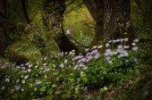 Elvarázsolt erdő lila vad virágok
