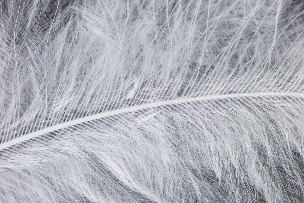 White bird feather. Fauna concept.