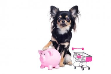 Long haired chihuahua with a piggy bank and shopping cart