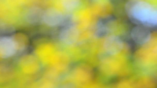 blured modrá, oranžová. žlutá, zelená, zlatá světla. Vánoční a novoroční výzdobu. párty výzdoba. bokeh rozostřeného pozadí abstraktní holiday. časová prodleva