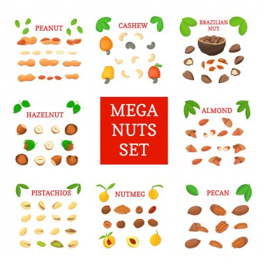Mega nut vector set. Pecans, hazelnuts, peanuts, nutmeg, almonds, cashews, Brazil nuts, pistachio. Eight different types of nuts for the packaging design of brochures about nutrition