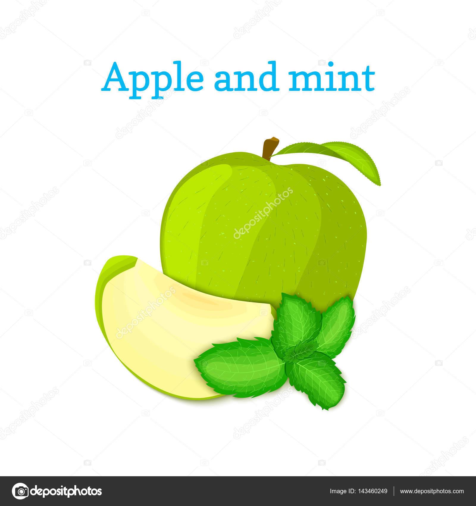 Composición de vectores de unas manzanas verdes y hojas de menta ...