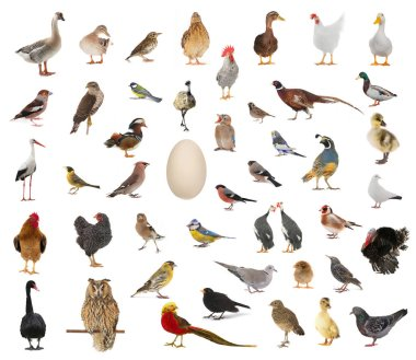 birds who have appeared from egg
