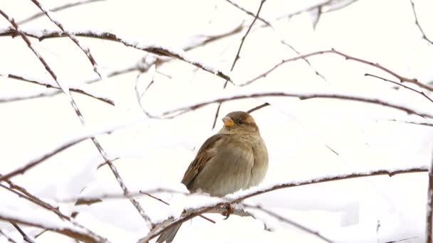 Sperling im Wald im Winter auf Ästen