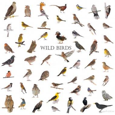 collage of wild birds