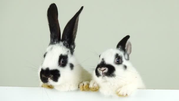 two white bunny on a white screen