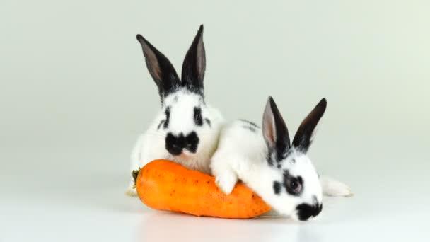 zwei weiße Hasen auf einem weißen Bildschirm in der Nähe einer Möhre