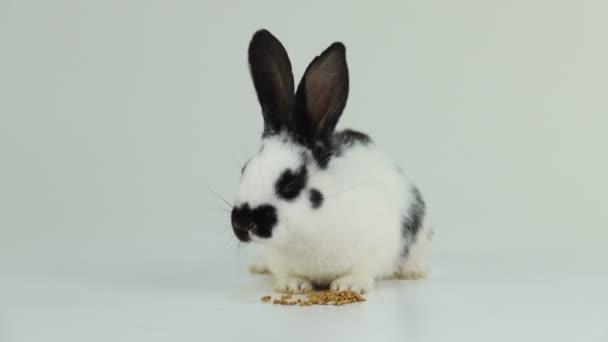 Bílý králík na bílé obrazovce jíst pšeničné zrno