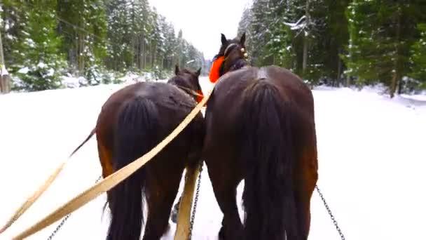 Koně běžet s zvony v zimě. zvuk