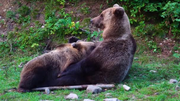 A bear mother feeds her baby breast milk
