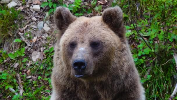 A medve más irányba néz.