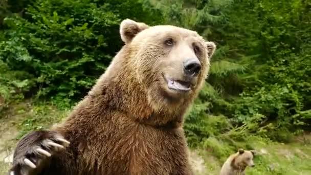 Medve integető mancsa az erdő hátterében.