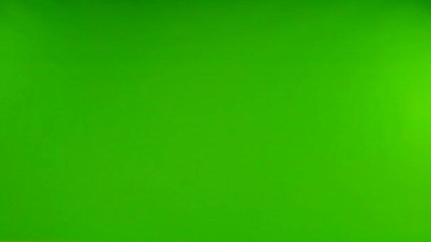 Létající bílý holub na izolované zelené obrazovce. zpomalený pohyb