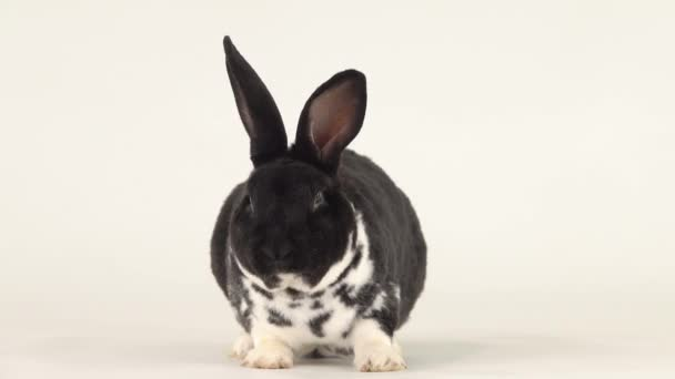 Funny chewing rabbit isolated on a white background.