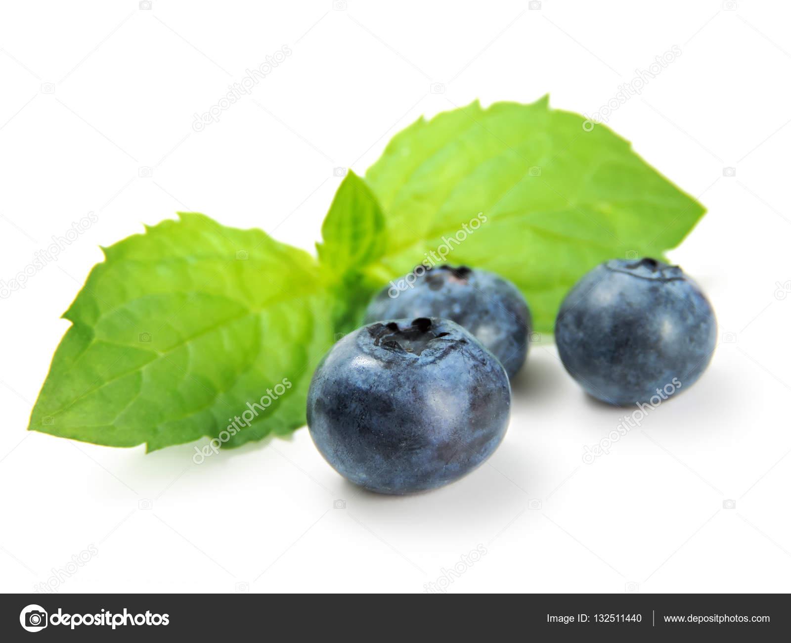 Fresh blueberries and mint leaf — Stock Photo © Eivaisla