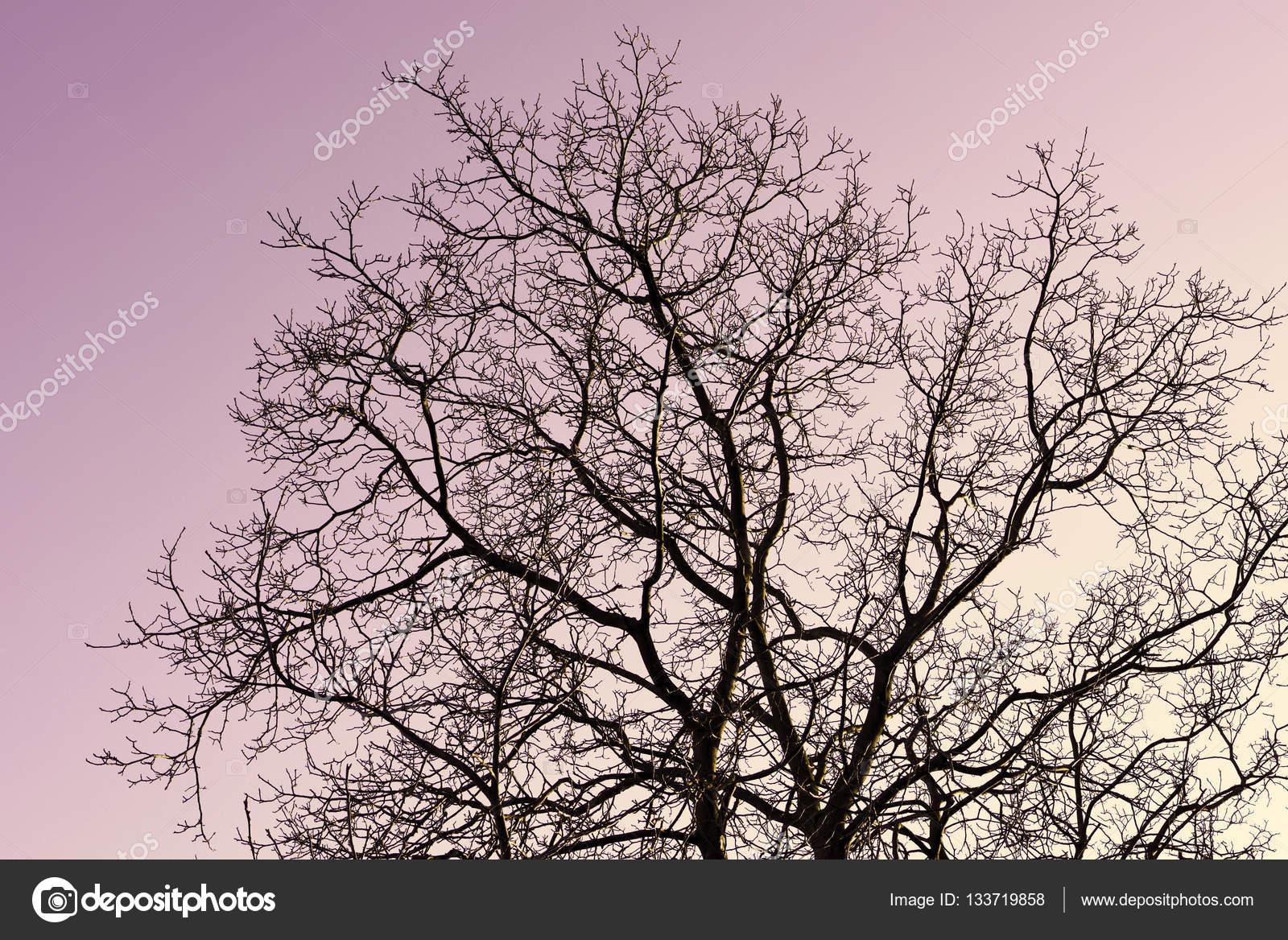 Kahler Baum am Abend — Stockfoto © Eivaisla #133719858