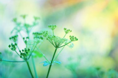 Gentle green flowers
