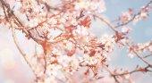 gyönyörű virágok háttér