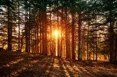 Fotografie krásné Lesní krajina