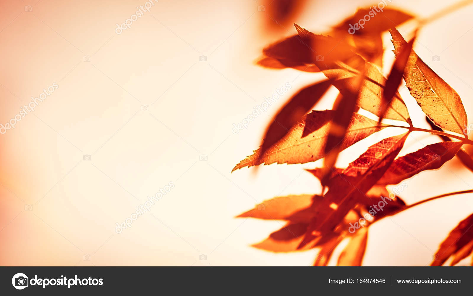 autumn leaves border stock photo anna om 164974546