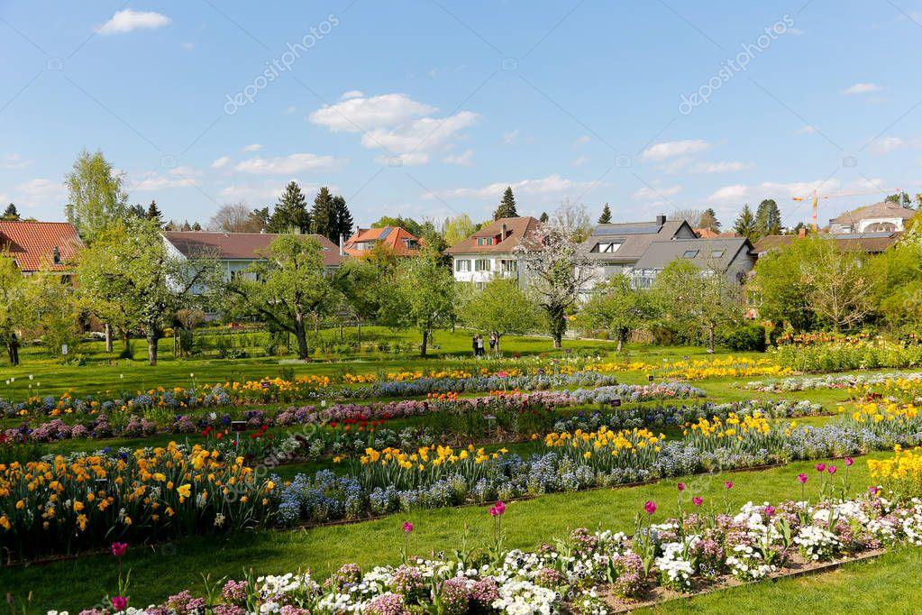 Flowers in the garden in Bern