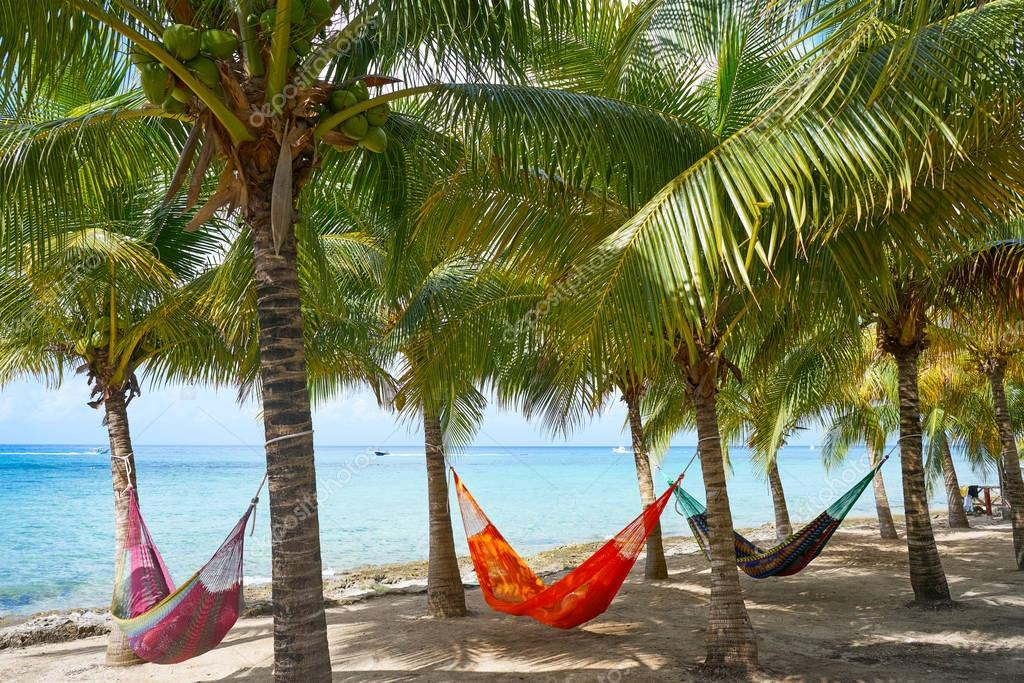 Cozumel island beach palm tree hammocks
