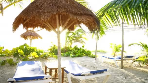 Kokosová palmy v karibské pláži Mayské riviéře v Mexiku